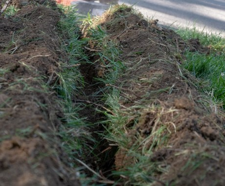 Protecting Your Home from Tree Roots with Tree Root Removal