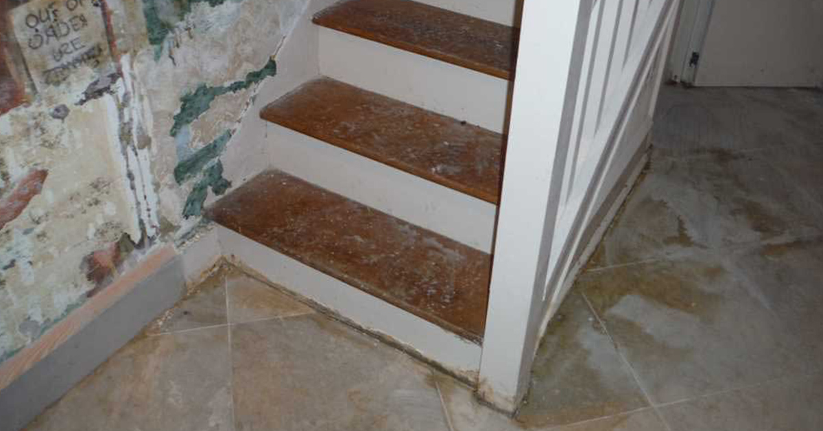 mold in stairs