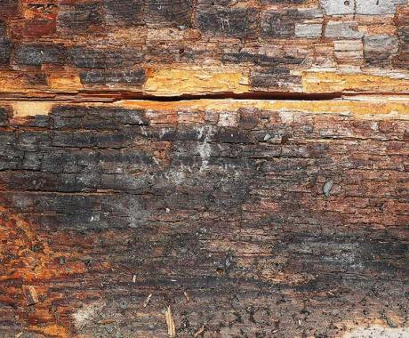 Differences Between Wood Rot and Mold