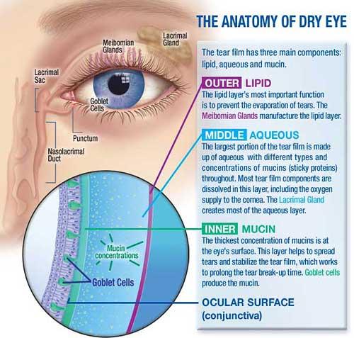 鄭醫師整骨治療保健中心: 認識乾眼癥的治療與預防
