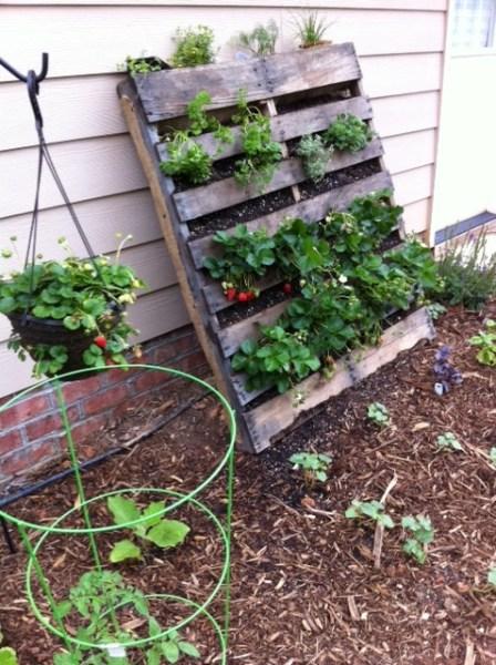 pallet planter vertical garden strawberries | innovativegardening