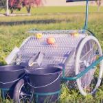 Le système de ramassage de pomme Obsterntetechnik Huemer travaille en continu jusqu'à remplir les deux seaux.