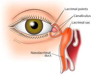 Eyelids, Orbit and Tear Duct – Inof   Centro de