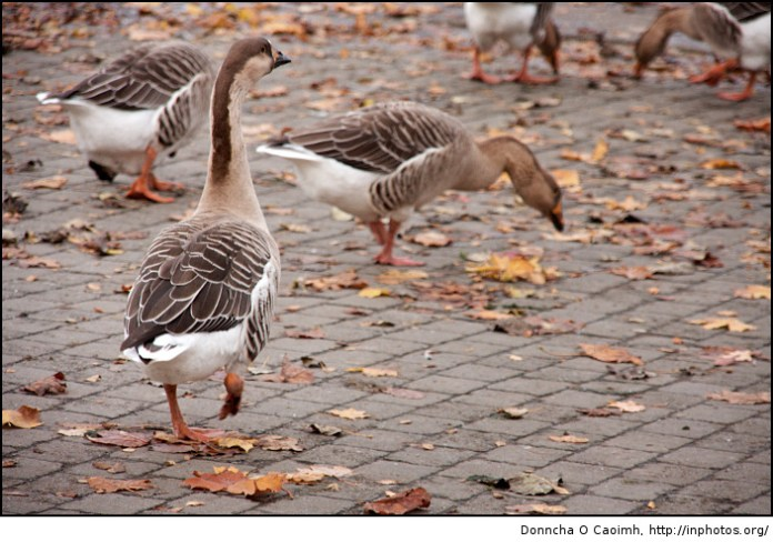 """Watch out! Duck! I said, """"duck"""""""