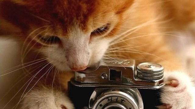 The non-average photographer