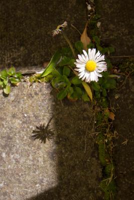 2008-04-20_blarney_30