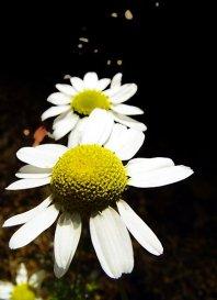 photoblog-20040811