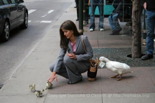 2005-05-16_duck_shoot_2029