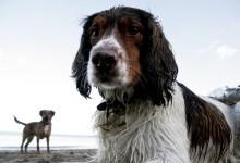 Ruby on the beach
