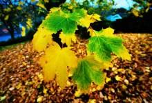 Brilliant Winter Leaves