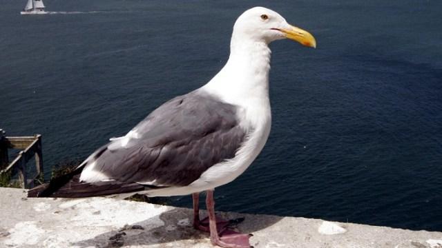 A resident of Alcatraz