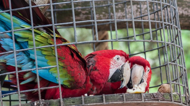Parrots at Fota Wildlife Park