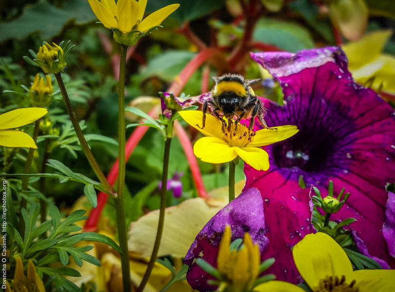 Bee on the flowers