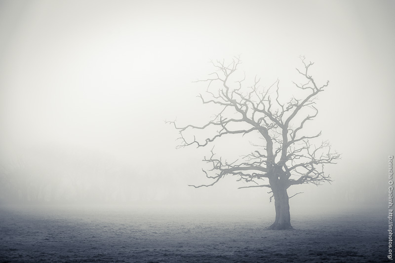 Blarney Tree in Fog