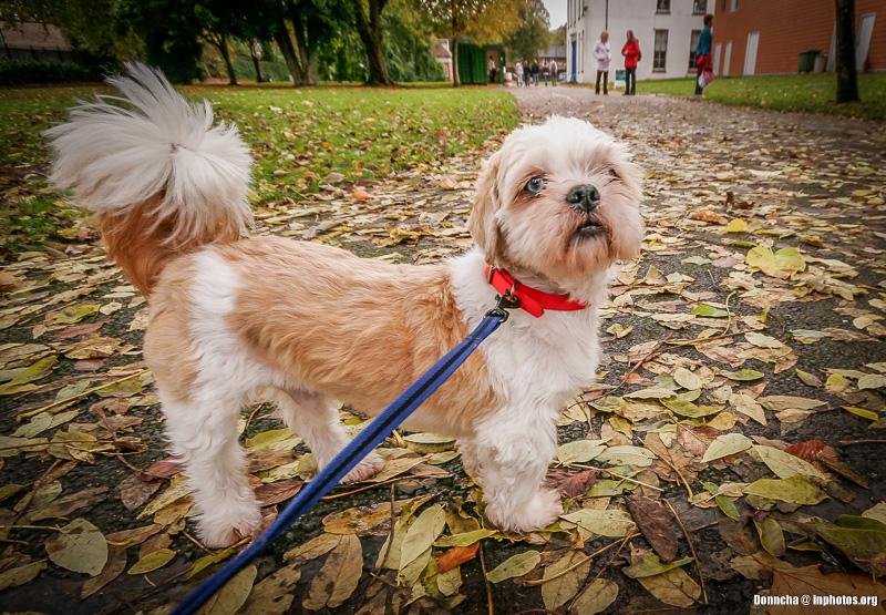 Oscar in the Park