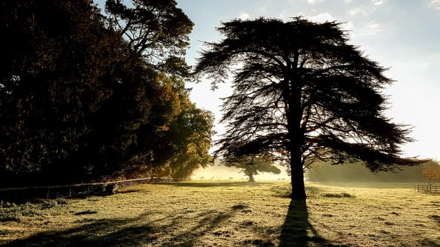 Sunlit trees in the grounds of Blarney Castle