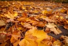 The Autumn Coat