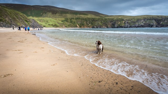 The Dog on Silver Strand
