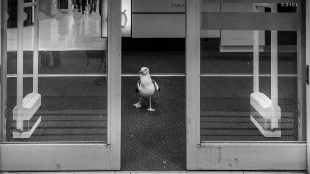 A Seagull in Boots