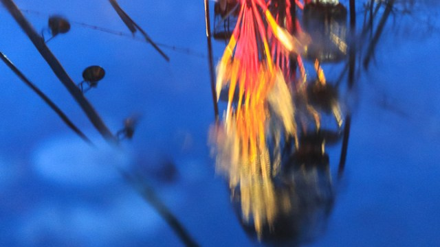 The Ferris Wheel in the fountain