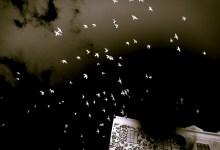 The birds, the birds!