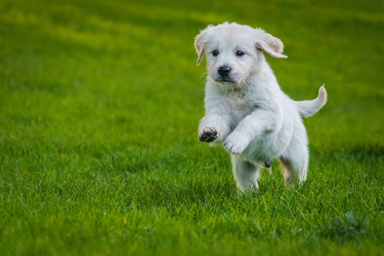 Neville the Puppy