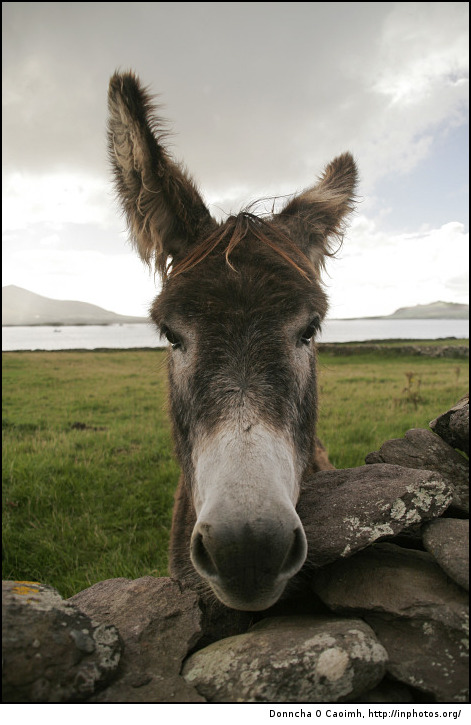 Donkey eyes staring at me