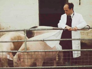 Matthew Herbert with pigs