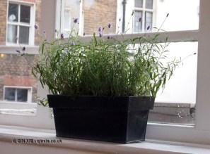 Pot plant, jam making with Vivien Lloyd