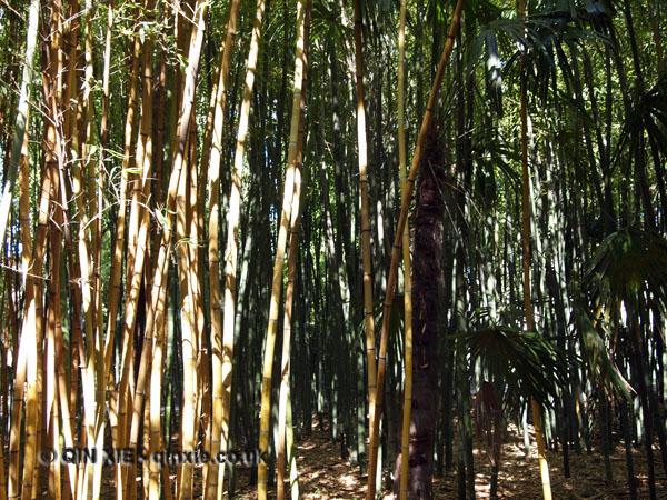 Bamboo forest, Château de Flaugergues, Montpellier
