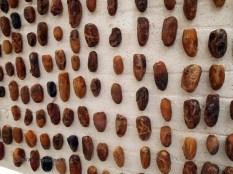 Different date varieties, Tunisia