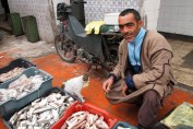 Man selling fish, Tunisia