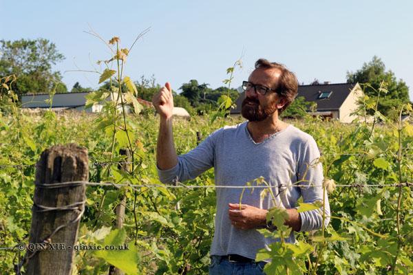 Thierry Germain, Domaine des Roches Neuves, Saumur-Champigny