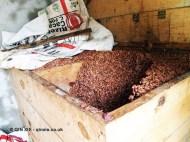 Cocoa beans, Loma Sotavento Cacao plantation, Dominican Republic
