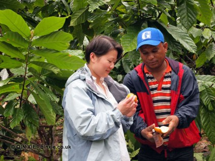 Qin Xie at Loma Sotavento Cacao plantation, Dominican Republic
