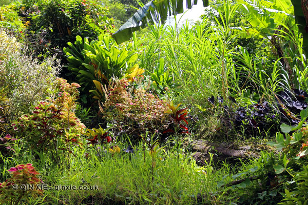 Green vegetation, Grenada