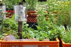 Princezzinnen Garten plant tubs