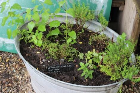 Princezzinnen Garten tub garden