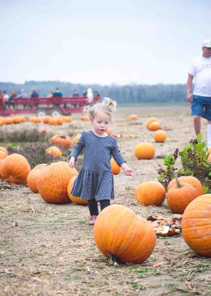 Clara_Pumpkin Patch