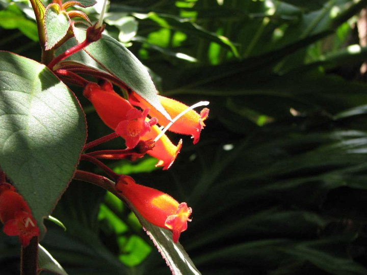 291117_Funchal_cote_jardin_23