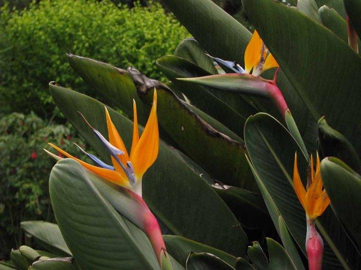 291117_Funchal_cote_jardin_47