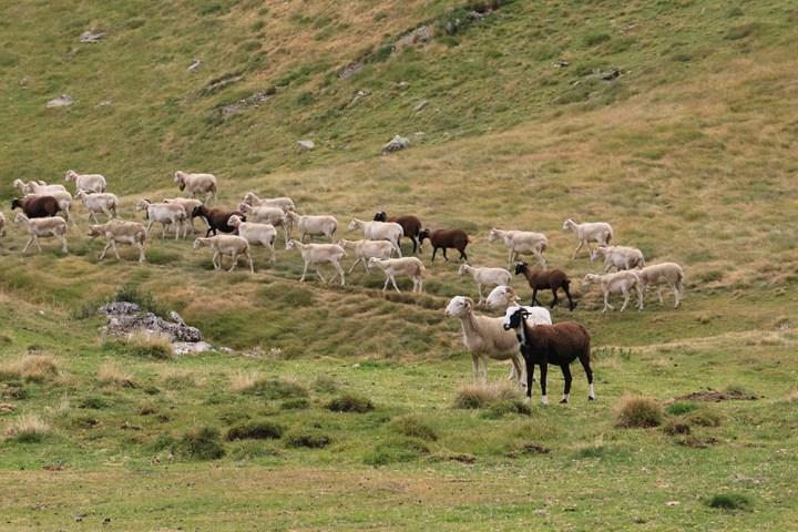 #UnJourDesTextes – Le berger, les randonneuses et les 20 rebelles