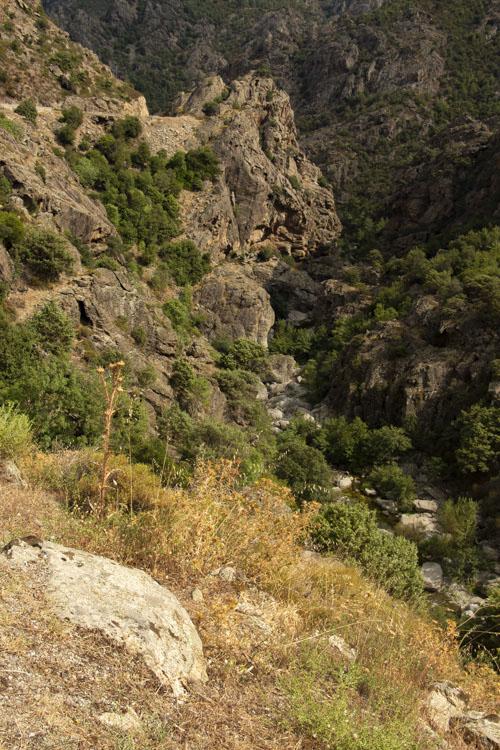 le fleuve Golo