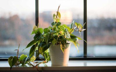 Inredning i fönster