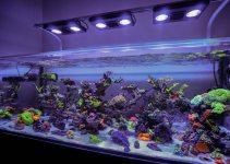 aquarium laut