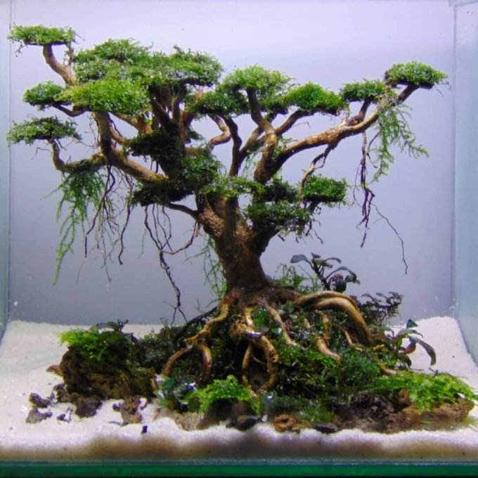 Hiasan Aquarium Akar Bonsai