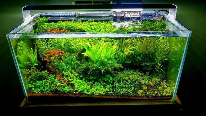 Hiasan Aquarium Tanaman Aquascape
