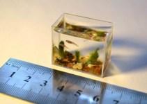 ilustrasi aquarium mini dan mistar pada artikel cara membuat aquarium