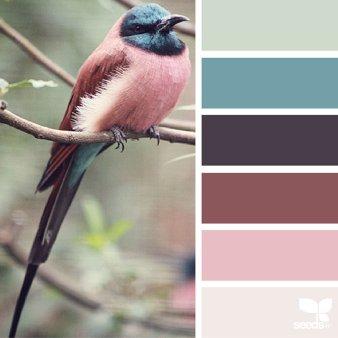 renk paleti