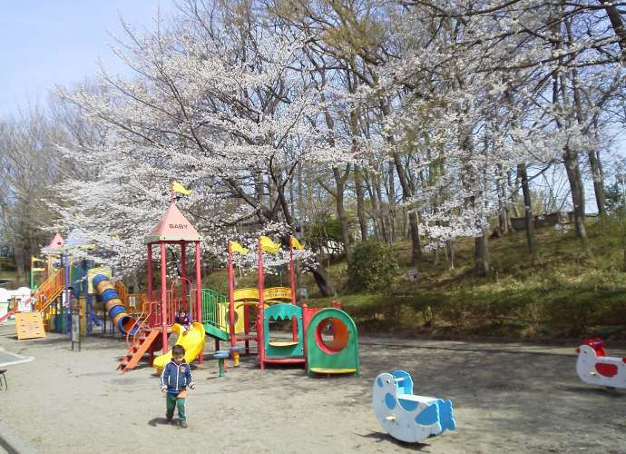 Kitamoto Children's park cherry blossoms